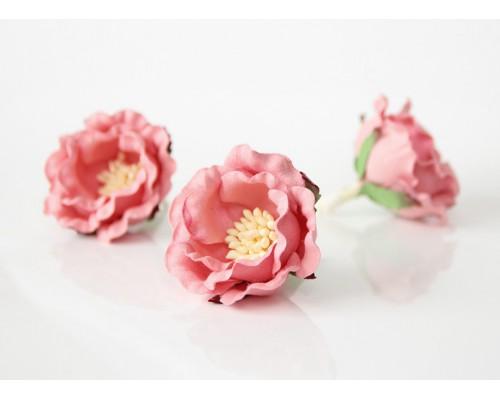 """Полиантовые розы """"Розовоперсиковые темные"""", 1 шт."""