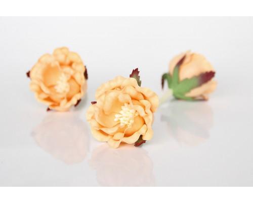 """Полиантовые розы """"Персиковые"""", 1 шт."""