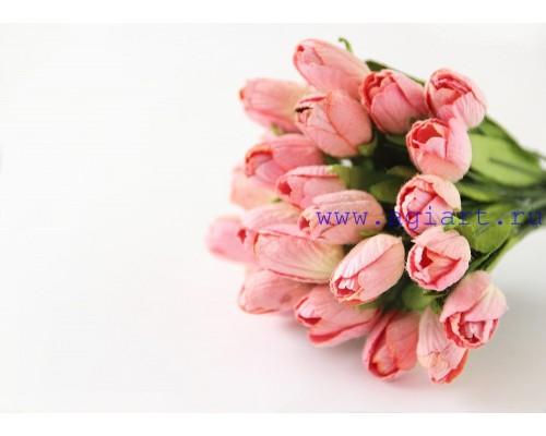 """Тюльпаны кремовый с розовым"""", 5 штук"""