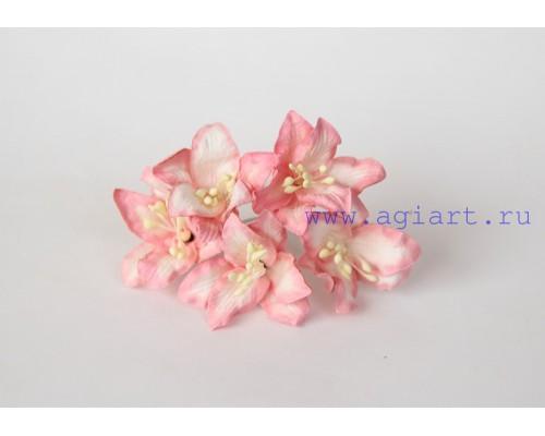 Лилии коралловые с белым, 5 шт.