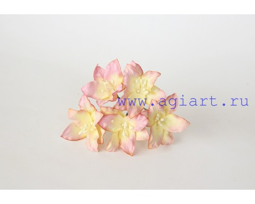 "Лилии ""розово-желтые светлые"", 5 шт."