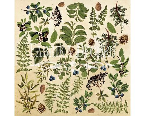 """Лист для вырезания. Набор №2 """"Botany summer"""" Фабрика Декору"""