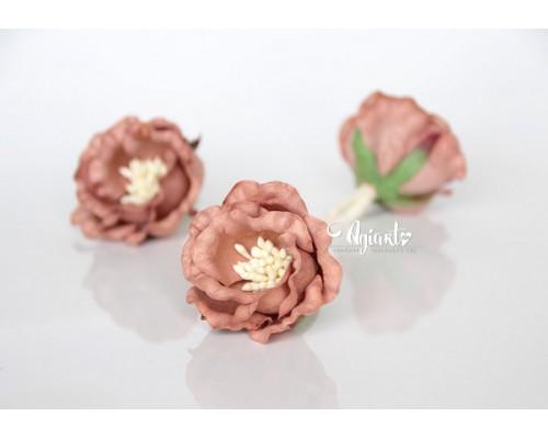 """Полиантовые розы """"Бежевый темный"""", 1 шт."""