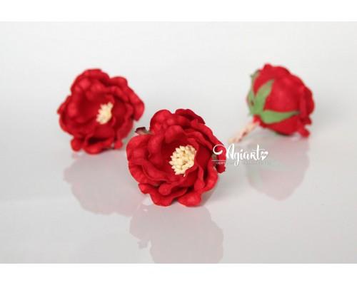 """Полиантовые розы """"Красный"""", 1 шт."""