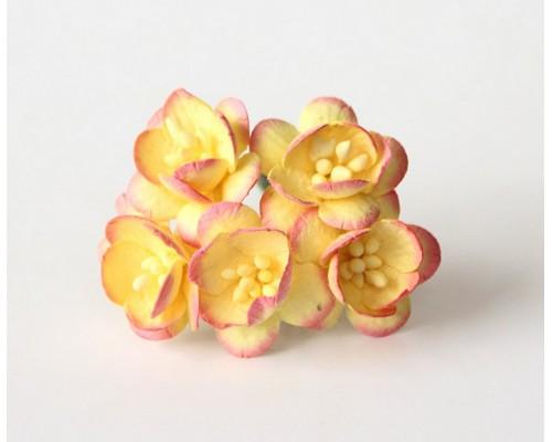 Вишня розово-желтые, 5 шт