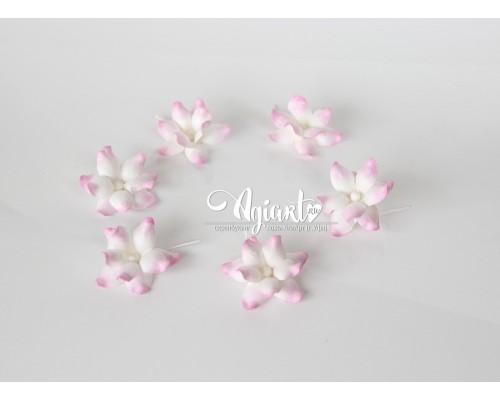 """Фиалки """"розовые с белым"""", 5 шт"""