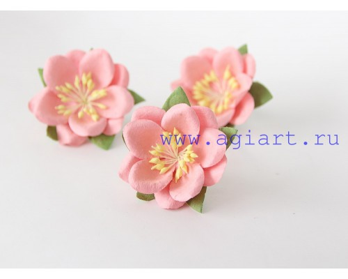 Сакура розово-персиковая, 1 шт.